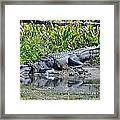 Double Grinned Framed Print