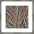 Dried Palm Fronds Framed Print