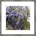Dripping In Violet Framed Print