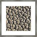 Dry Mud Patterns On The Racetrack Framed Print