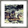 Duck Duck Duck  Framed Print