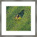 Duckweed Soup Framed Print