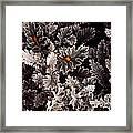 Dusty Miller  Framed Print