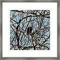 Eagle 1 Framed Print