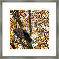 Eagle In Autumn Framed Print