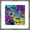 Egyptian Starcluster  Love-in A Puff Framed Print