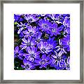 Electric Indigo Garden Framed Print