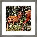 Elk Fawn Framed Print