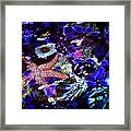 Emerged Starfish Framed Print