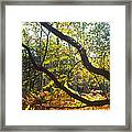 English Woods Framed Print