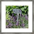 European Markets - Lavender Framed Print
