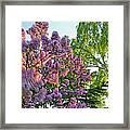 Evening Lilac Framed Print