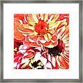 Explosion Of Bright Zinnias Framed Print