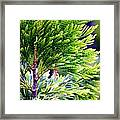 Extreme Shades Of Green Framed Print