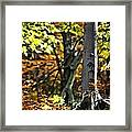 Fall Beauty Framed Print
