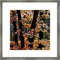 Fall Beckons  Framed Print