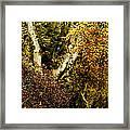 Fall Color Wall Art Landscape Framed Print