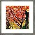 Fall Color NW Lovejoy and 22nd Street Framed Print