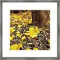 Fall Floor Framed Print