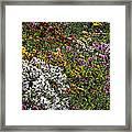 Fall Flower Garden Framed Print
