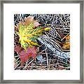 Fall Forest Floor Framed Print