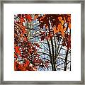 Fall In The City 1 Framed Print