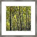 Fall In The Rockies Framed Print