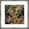 Fall Leaves Over Florida Pond Framed Print