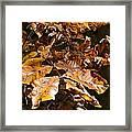 Fall Leaves Part Five Framed Print