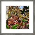 Fall Leaves Part Two Framed Print