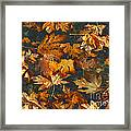 Fall Maple Leaves On Water Framed Print