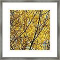 Fall Trees Art Prints Yellow Autumn Leaves Framed Print