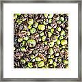 Fallen Apples Framed Print