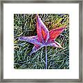 Fallen Autumn Leaf In The Grass During Morning Frost Framed Print