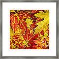 Fallen Autumn Maple Leaves  Framed Print