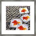 Fallen Autumn  Prints Framed Print