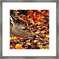Fawn In Autumn Framed Print