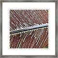 Feather Or Fern Framed Print