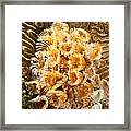 Featherduster Framed Print
