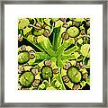Fennel Flowers, Sem Framed Print