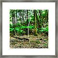 Fern Grove Framed Print