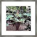 Feuilles Kyoto Framed Print