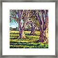 Ficus Trees Framed Print