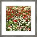 Field Of Daisies And Poppies. Framed Print by Bernard Jaubert