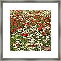 Field Of Poppies And Daisies In Limagne  Auvergne. France Framed Print