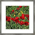 Field Of Red Poppies Framed Print