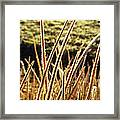 Fingers Of Frost Framed Print