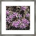 First Flowers Of Spring Framed Print
