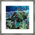 Fish Trouble Framed Print