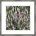 Flamingo Feather Flowers Framed Print